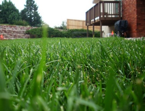 Spring Checklist- Is Your Yard Ready?